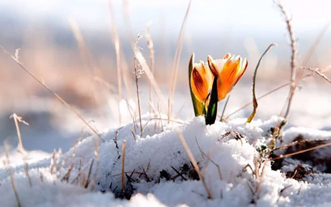 Spring is (almost) on it's way!